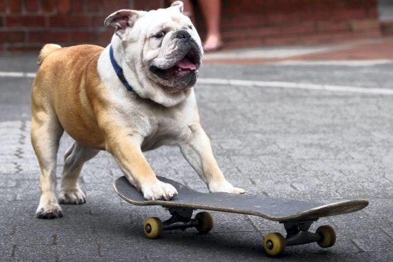 Что делать, если новый скейт не поворачивает: лечим болячку